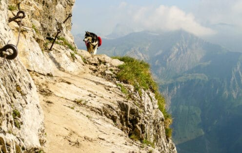 20 Common Questions When Hiking with a Dog