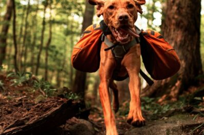 Factors to Consider If Your Dog Can Hike