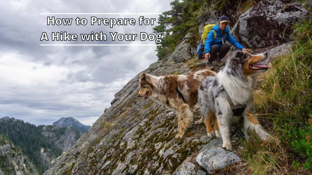 A Hike with Your Dog