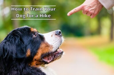 15 training tips to take your dog on a hike
