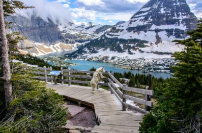 Ultimate Itinerary Guides for a Trip to Glacier National Park