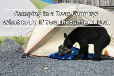 Camping in a Bear Country: What to Do If You Encounter a Bear