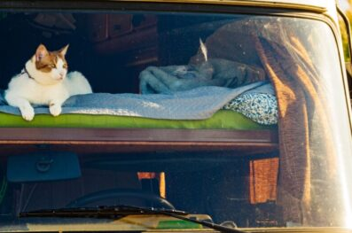 A Guide to Car Camping with Your Cat